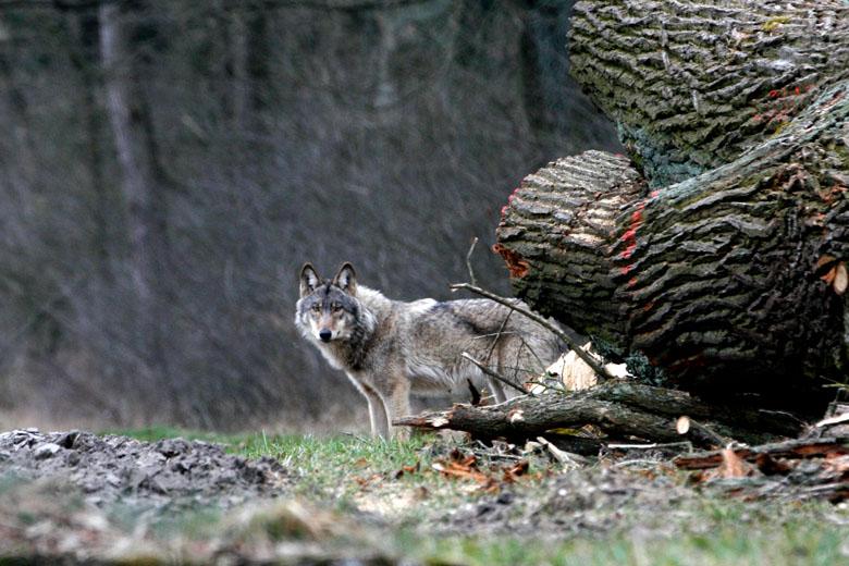 wolf-raeber-tg_0919-b1